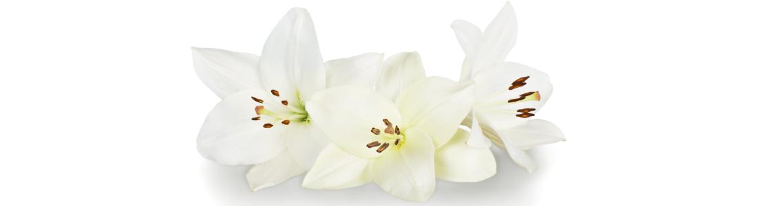 Three white lilies